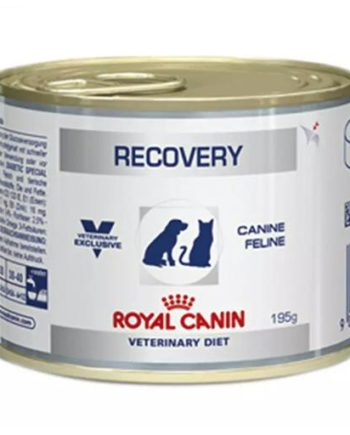 Ração Clínica Royal Recovery Lata 195Grs